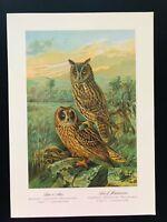 Bird Print-Tengmalm's Short & Long Eared Owls SCHLEIEREULE-Plate Naumann-1896