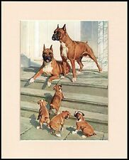 BOXER DOGS AND PUPPIES LOVELY DOG PRINT MOUNTED READY TO FRAME