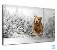Happy Dog Running On Snow For Kids Bedroom Canvas Print Wall Art Picture