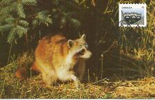 Racoon Animal Babies Mammal Wildlife Fdc Canada Maximum Card
