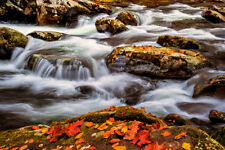20x30 Photograph picture giclee canvas fine art waterfall fall color Great Smoky