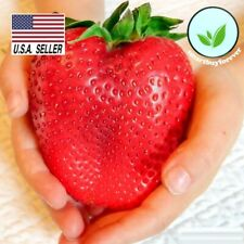 STRAWBERRY SEEDS - 300 SEEDS -  Fruit * Heirloom * Non-Gmo * USA!