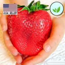 STRAWBERRY SEEDS - 100 SEEDS -  Fruit * Heirloom * Non-Gmo * USA!