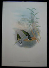 1861 Original Gould Hummingbird Cuvier's Sabre-wing Camplyloperus Cuvieri 1st Ed