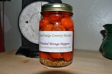 HOTTEST IN THE WORLD TRINIDAD MORUGA SCORPION PEPPERS - PINT 16 OZ.