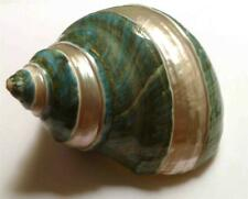 "3.5"" Polished Strips! Emerald Green Turbo Seashell PEARL Iridescent!"