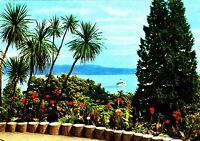Insel Mainau  ,Ansichtskarte