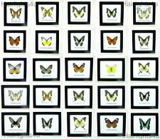 Wooden Mounted Insect & Butterfly Collectables
