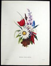 GRAPE HYACINTH RED TULIP DAISY ~ Large Botanical Floral Color Art Print