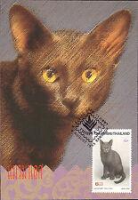 Complete Set 4 maxicards Thailand 1995 Domestic CAT Felis Catus Life Animals