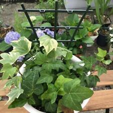 1pcs Plant Vines Climbing Trellis DIY Garden Mini Potted Holder 15*25cm plastic