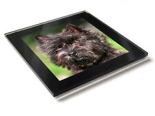 CAIRN TERRIER Dog Puppy Premium Glass Table Coaster with Gift Box