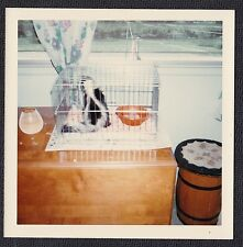 Old Vintage Photograph Skunk in Cage on Table by Window 1969