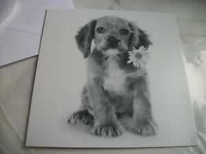 Blank card - Puppy
