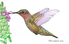 """CAN. Wildlife  Hummingbirds Print/Pencil drawing """"8X10""""  A Lot of 2 for $8.00"""