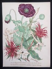 "John Nash ""Poppies"" Original 1939 Lithograph Printed by The Baynard Press"
