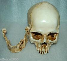 1:1 High Quality Skull Human Anatomical Anatomy Head Medical Model New
