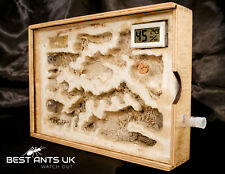 Large Wooden Ant Hybrid Nest Ant Housing Ant Farm Formicarium