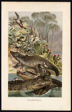 Antique Print-NILE-CROCODILE-EGYPT-Brehm-1892
