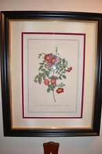 Georg D. Ehret 1708-1770-Royal Virgin Rose without Thorns, beaded wood fme 19x24