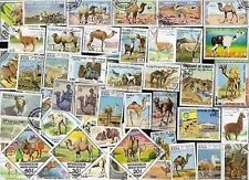 50 CAMELS MOSTLY (A FEW LLAMAS ETC) ON STAMPS