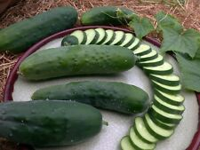 25 Green Gem (Poinsett) CUCUMBER seeds  - foil pack ~ Yes we send to Tas