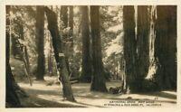 Coachella California Date Palms Indio 1938 RPPC Photo Postcard 20-3424