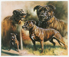 STAFFORDSHIRE BULL TERRIER DOG LIMITED EDITION PRINT Staffie by Mick Cawston