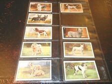 1936 Gallaher DOGS breeds near complete set 48 cards-1 Tobacco Cigarette card