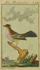 Oiseaux-Mésange-meisenköniglein-BUFFON - Kolor. cuivre pli 1780