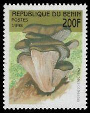 """BENIN 1057 - """"Pleurotus ostreatus"""" Mushroom (pf34434)"""