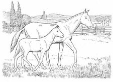 Scene - Scenery - Animal - Animals - Horse#4 Unmounted Clear Stamp Approx75x54mm