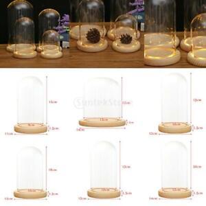 Glashaube DIY Deko Glaskuppel Glassturz Glasglocke mit Holz Base New