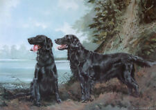 """Flat-Coated Retrievers Art. Actual Picture is 8"""" x10"""" on 16"""" Fabric Panel-Sew"""