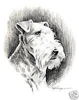 Lakeland Terrier Drawing Dog Art 13 X 17 by Artist Djr