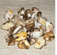 10 x Rare Peanut Petrified Wood Tumblestones 13mm-16mm Crystal Wholesale Bulk