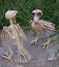 2- Skeleton Bones Crow Raven Halloween Dead FOSSIL birds ornament decor/Prop!
