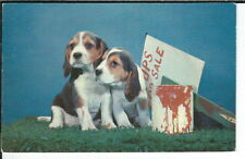 CA-320 Beagle Pups Dogs for Sale Chrome Postcard Hoppmire Aurora Indiana