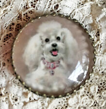 """FLUFFY WHITE FRENCH POODLE 1 1/4""""  Glass Dome BUTTON Vintage Dog Card Art Pink"""