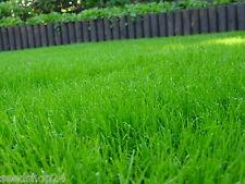 10 kg Schattenrasen Rasensamen Rasensaat Grassamen Rasen Gärtnerqualität