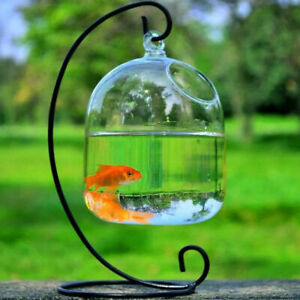 Wall Mounted Fish Tank Fishbowl Aquarium Hanging Terrarium Goldfish Betta Bowl _