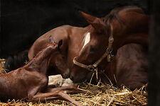 Clearoff dequine 200g naturale cavallo pony mughetto pidocchi stabile & acaro della scabbia KILLER