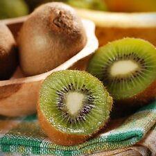 Green Kiwi Fruit 30 Seeds Local Farmer Big Size Juicy Sweet Kiwifruit Vine Plant