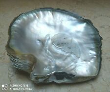 mother of pearl seashell giant 330 gr 175 mm oyster pinctada beauty