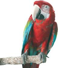 More details for beach branch perch large edible parrot african greys conure macaws caique perch