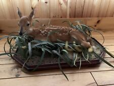 Deer Fawn Taxidermy Mount Absolutely Beautiful