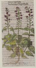 JACQUES DALECHAMPS CIRCEA LUTETIANA ENCHANTER'S NIGHTSHADE ERBA MAGA COMUNE 1630