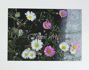 Original Floral Daisies Gouache Watercolour Pink white nature flower Painting