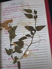 BOTANICAL / ORNAMENTAL PLANTS SCRAPBOOK / MT. SAN ANTONIO COLLEGE