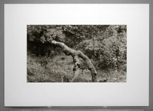 """DON CAMERON (1943-2016) OLD OAK COVERED WITH MOSS 13""""X22"""" OVER-SIZED PHOTOGRAPH"""